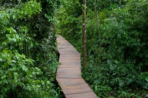 Caminante no hay camino, se hace camino al andar...A. Machado